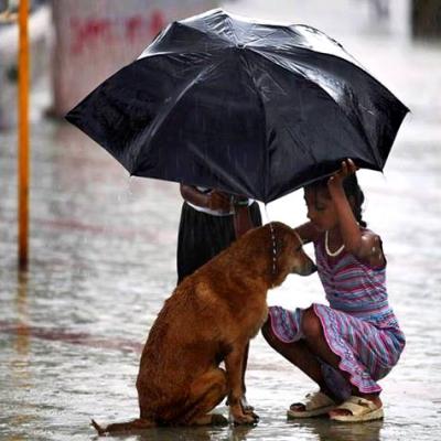 Отношения человека и собаки как межличностное и межвидовое партнёрство
