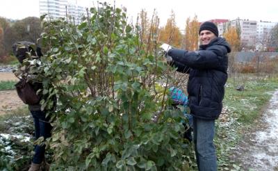 Добровольческие акции в ботаническом саду